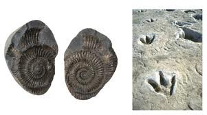 What is a fossil? Here an example of a Mold Fossil.